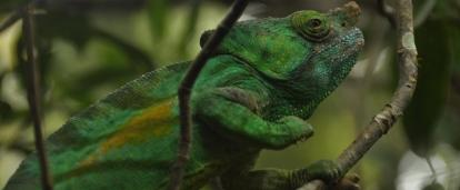 Volunteers spot a chameleon during their Conservation Projects in Madagascar for high school students